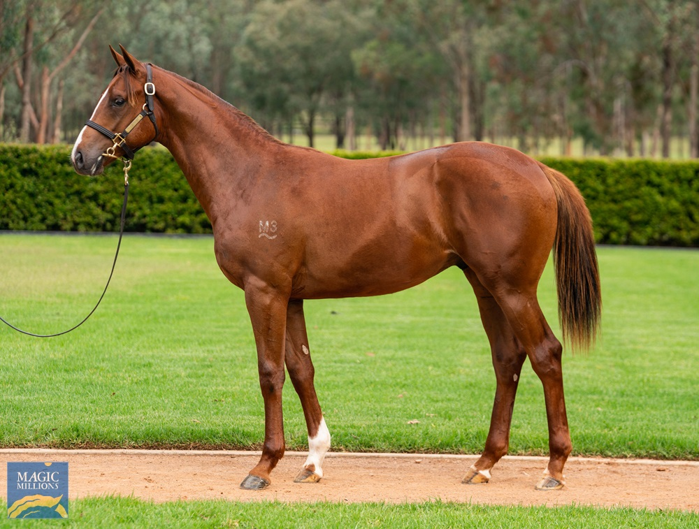 More Than Ready (USA) / Joy Toy (AUS) 2019 Colt - Image 1