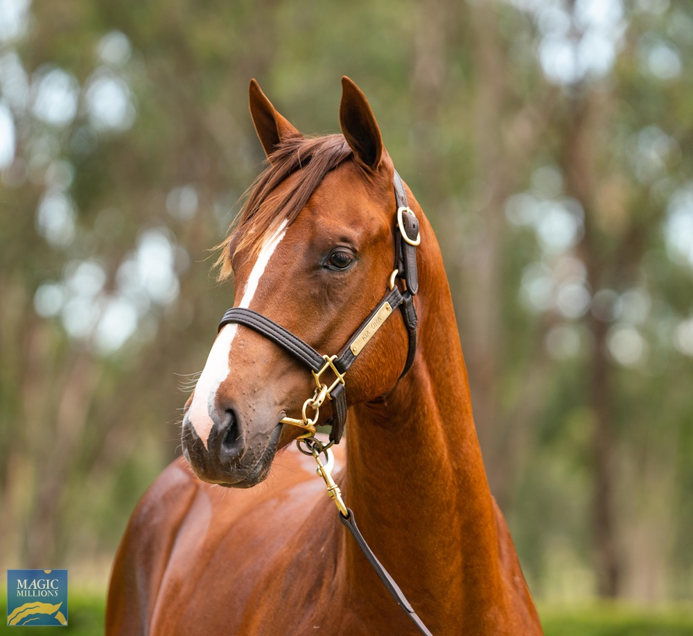 More Than Ready (USA) / Joy Toy (AUS) 2019 Colt - Image 2