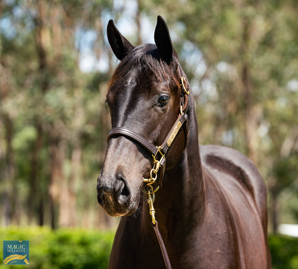 I Am Invincible (AUS) / Maastricht (NZ) 2019 Filly - Image 2