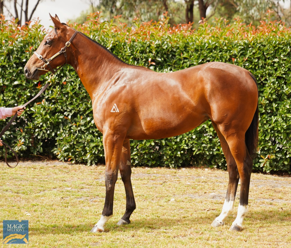 Shooting to Win (AUS) / What a Treat (AUS) 2019 Filly - Image 1