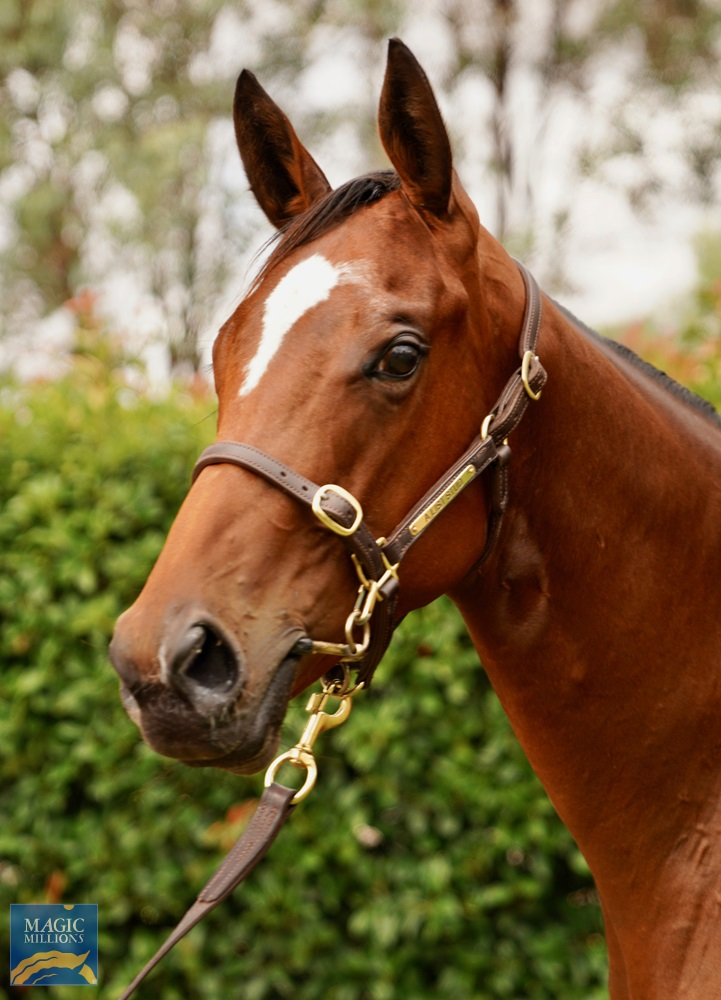Shooting to Win (AUS) / What a Treat (AUS) 2019 Filly - Image 2