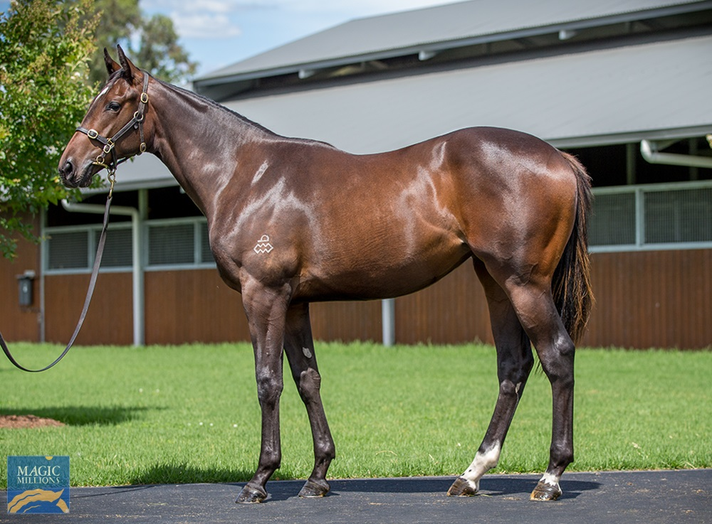 Written Tycoon (AUS) / Grito (AUS) 2019 Filly - Image 1