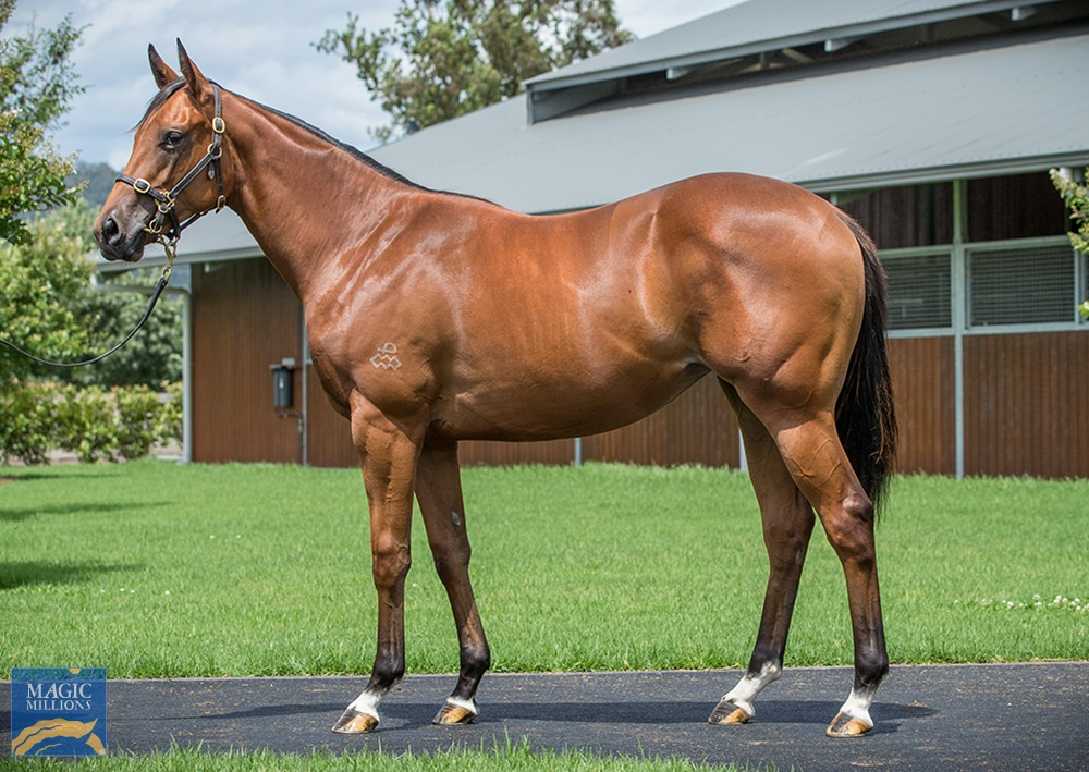 Shalaa (IRE) / Watchme (AUS) 2019 Filly - Image 1