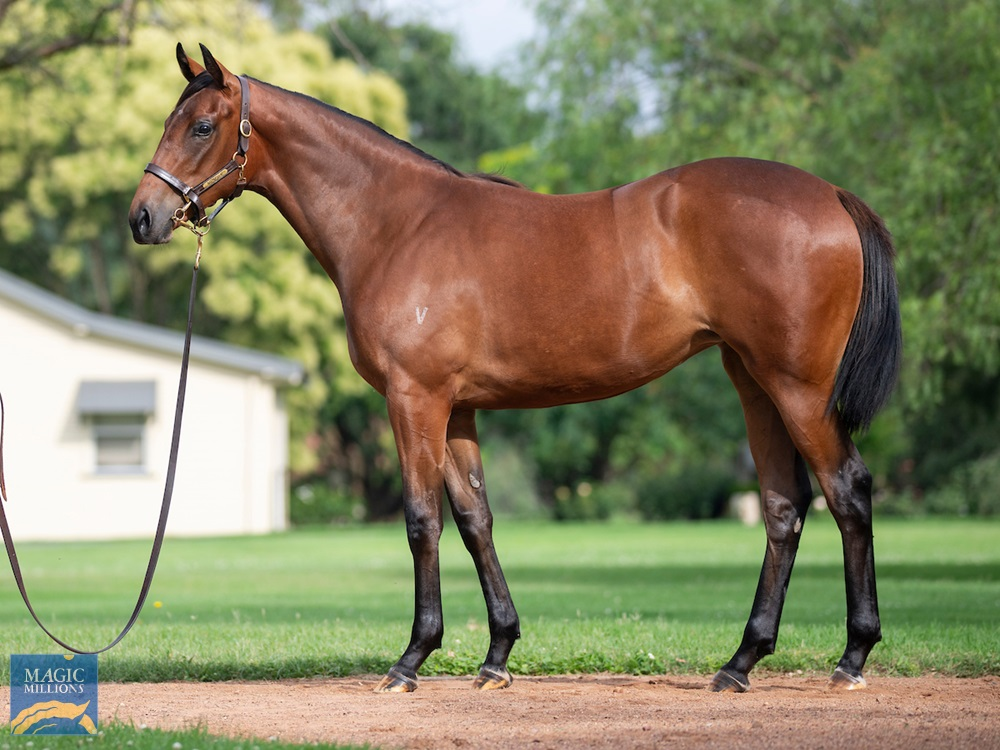 Russian Revolution (AUS) / Gipsy Countess (IRE) 2019 Filly - Image 1