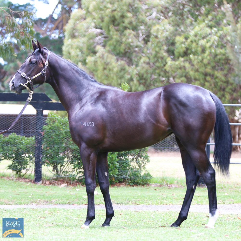 Written Tycoon (AUS) / Cocoa Doll (AUS) 2019 Filly - Image 1