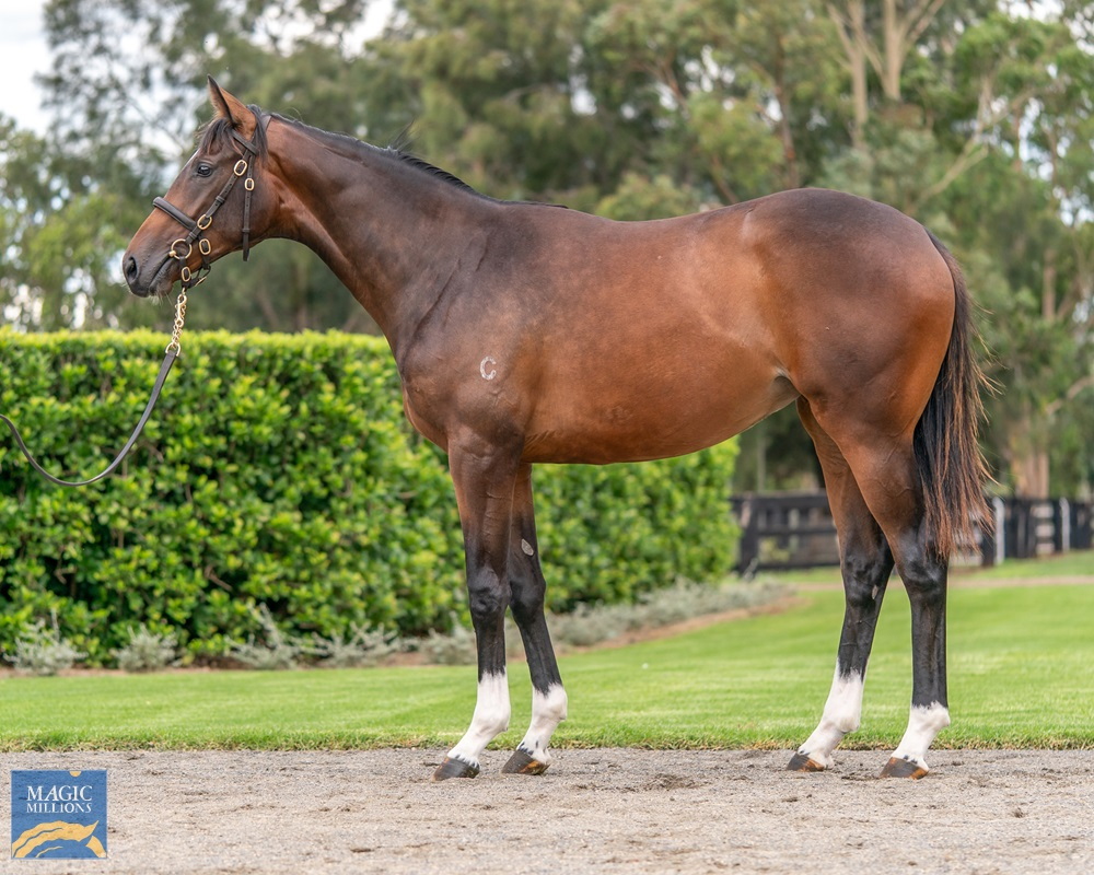 Churchill (IRE) / Bombay (AUS) 2019 Filly - Image 1