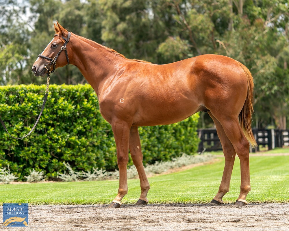 Merchant Navy (AUS) / Face of the Earth (AUS) 2019 Colt - Image 1