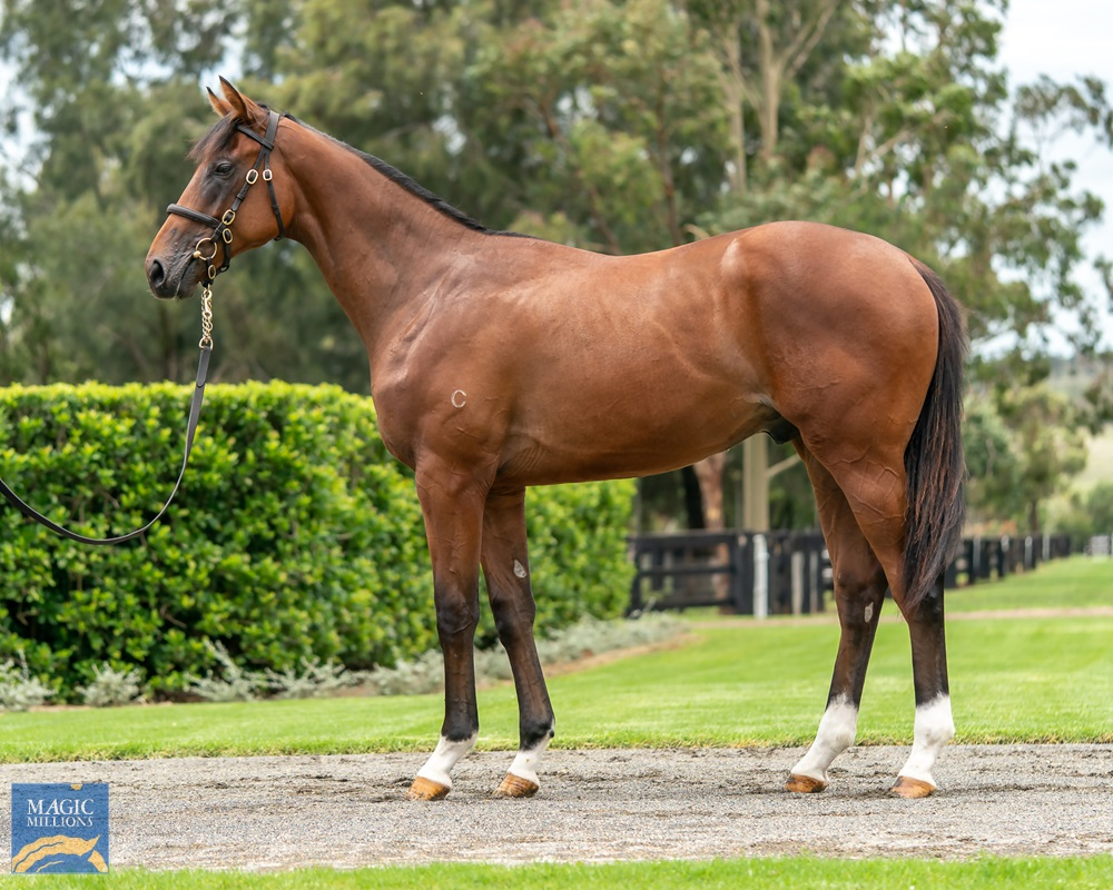Churchill (IRE) / Holy Moly (NZ) 2019 Colt - Image 1