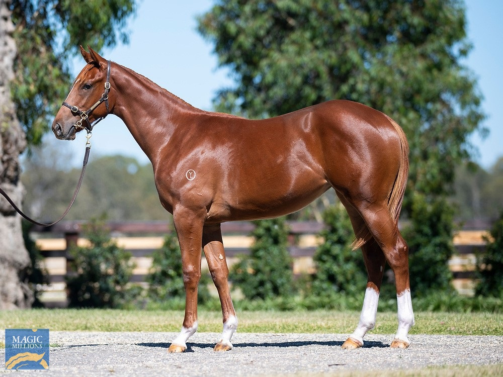 Exceed and Excel (AUS) / Cerberus Gal (AUS) 2019 Filly - Image 1