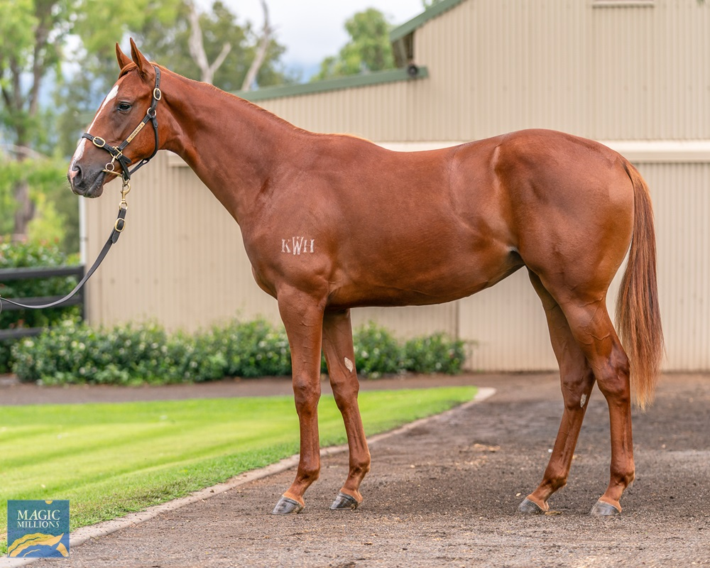 Written Tycoon (AUS) / Chill the Champers (AUS) 2019 Filly - Image 1
