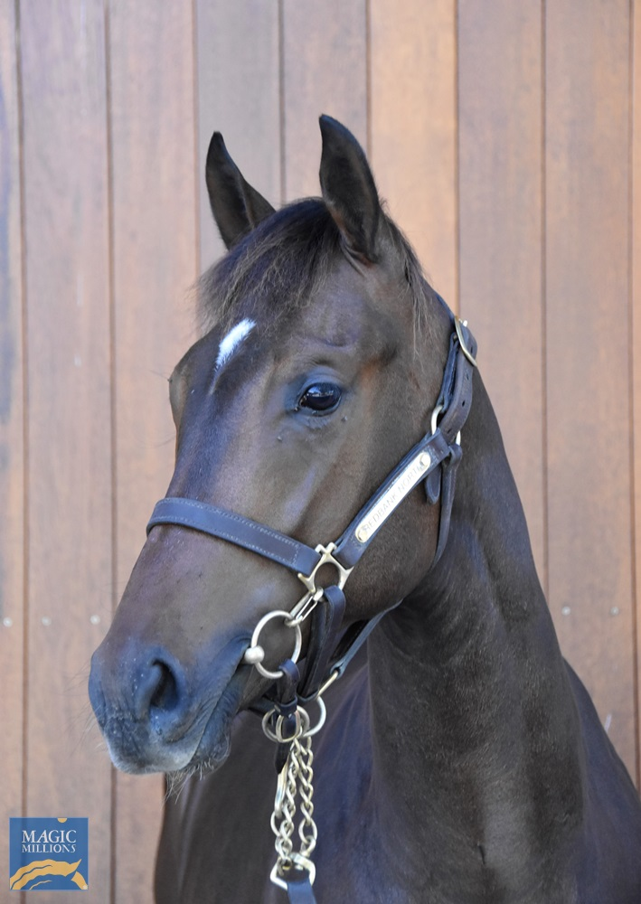 Impending (AUS) / High Harmony (NZ) 2019 Filly - Image 2