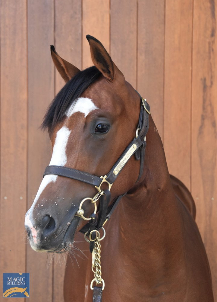 Supido (AUS) / Miss Falsified (AUS) 2019 Filly - Image 2