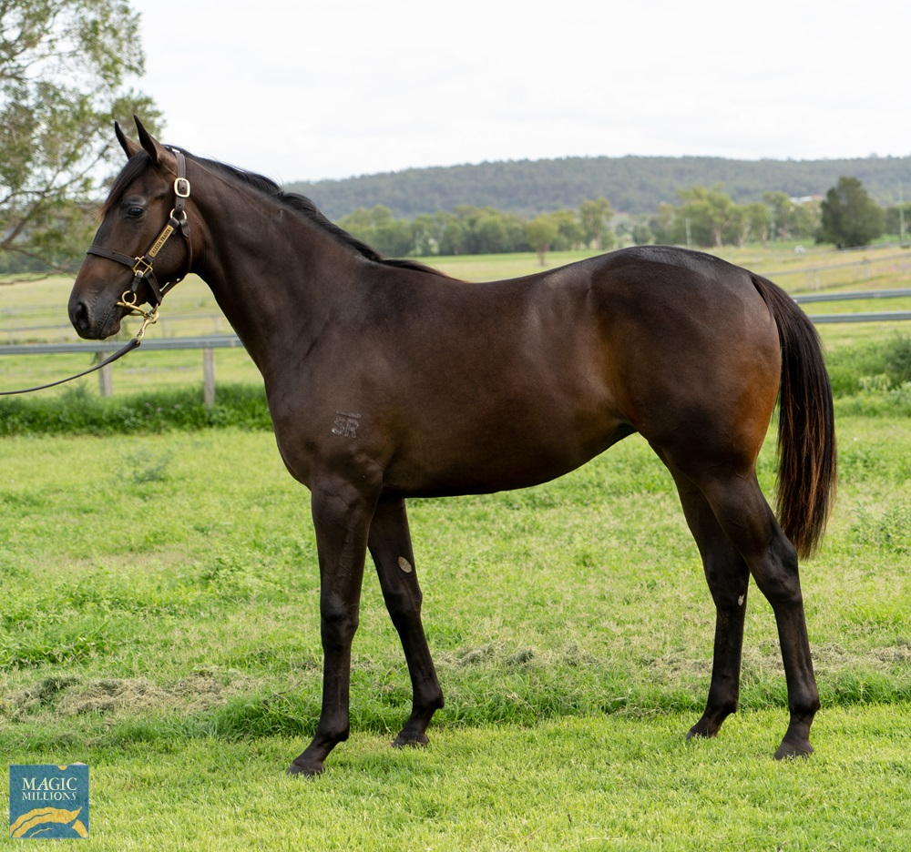 Vancouver (AUS) / Knockout Girl (AUS) 2019 Filly - Image 1