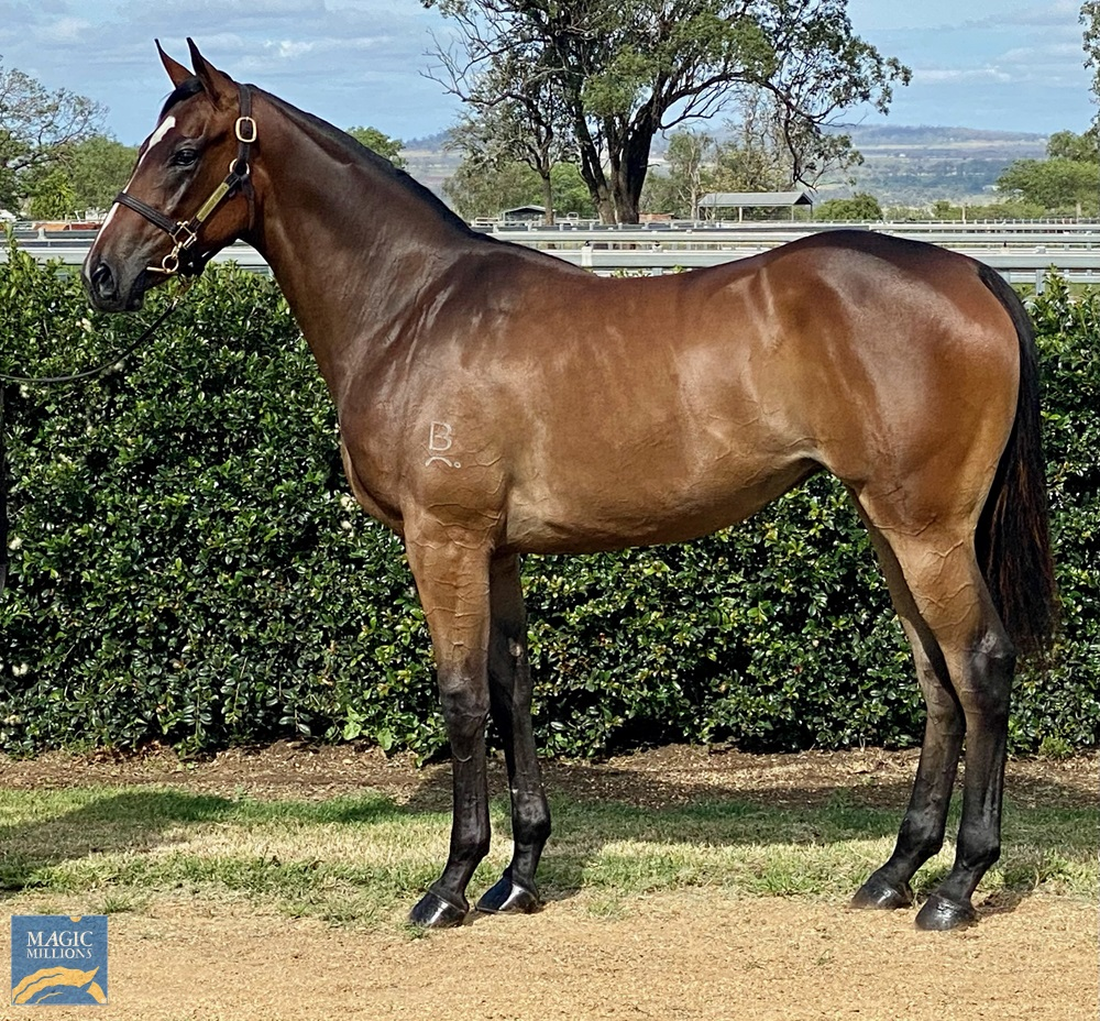 So You Think (NZ) / Valid Contract (AUS) 2019 Filly - Image 1