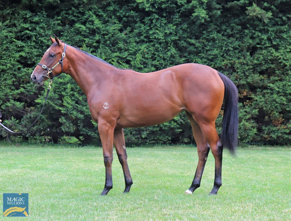 Sebring (AUS) / Faith in Hand (AUS) 2019 Filly - Image 1