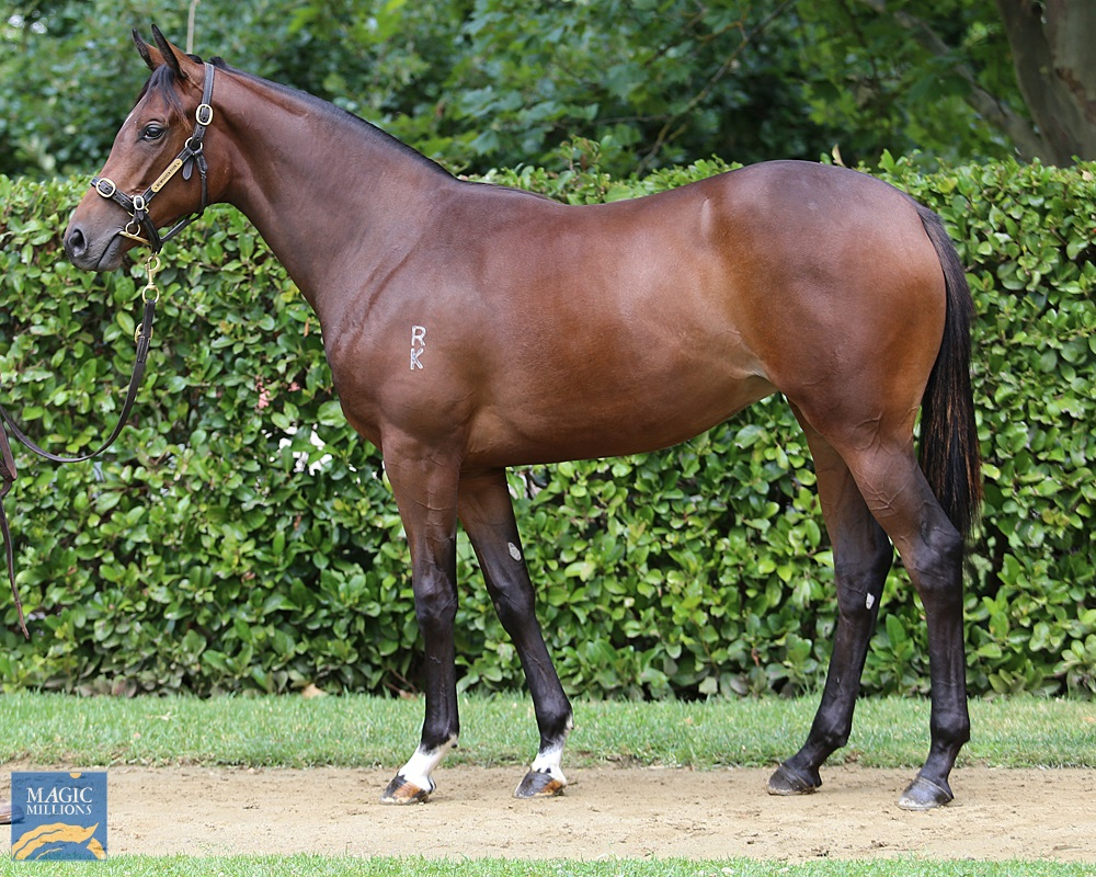 Dundeel (NZ) / Simply Brilliant (AUS) 2019 Filly - Image 1