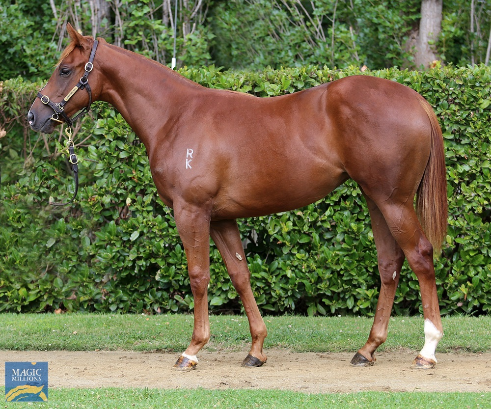 Exceed and Excel (AUS) / Turf Fairy (AUS) 2019 Filly - Image 1