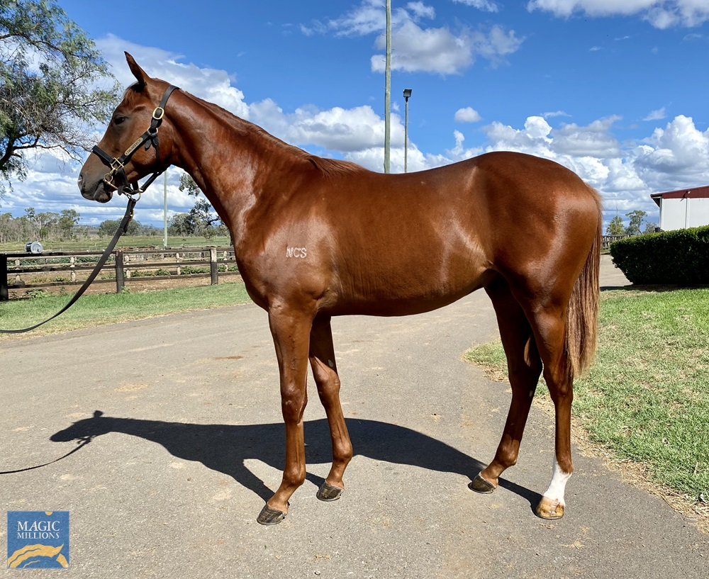 Territories (IRE) / Hidden Treasure (AUS) 2019 Colt - Image 1