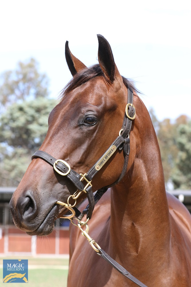 I Am Invincible (AUS) / Alteza Real (AUS) 2019 Filly - Image 2