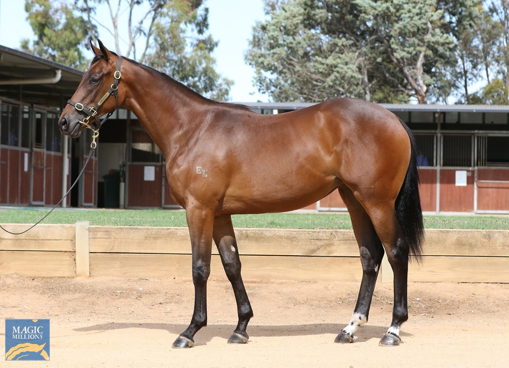 I Am Invincible (AUS) / Alteza Real (AUS) 2019 Filly - Image 1