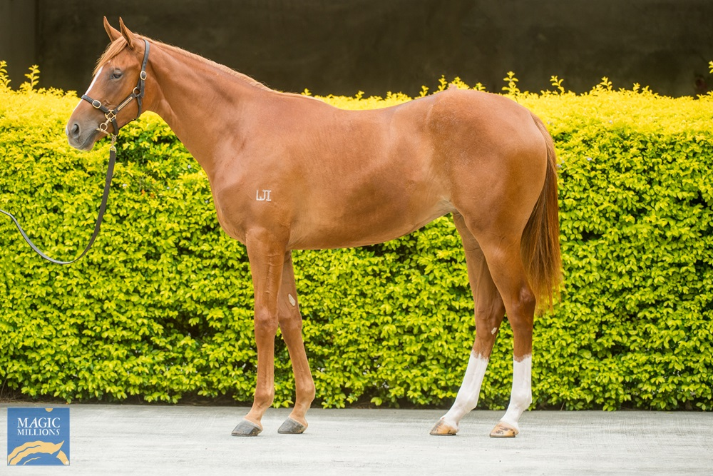 Zoustar (AUS) / My Dinah Lee (USA) 2019 Filly - Image 1