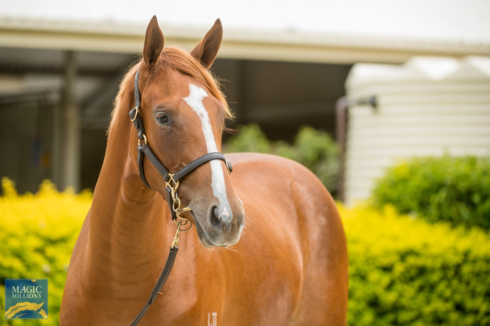 Zoustar (AUS) / My Dinah Lee (USA) 2019 Filly - Image 2