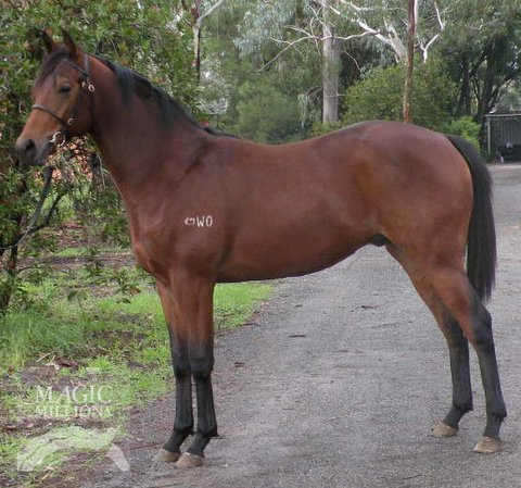 Just Add Buster (AUS) - photo 1