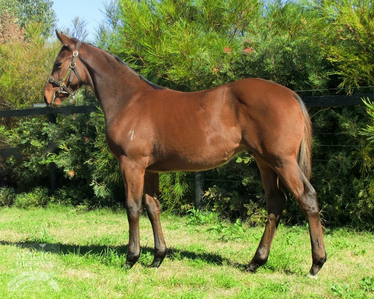 Smart Missile (AUS) / Cool as Oh (AUS) - photo 1
