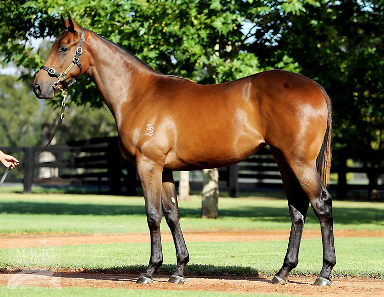 Exceed And Excel (AUS) / Set For Fame (AUS) - photo 1