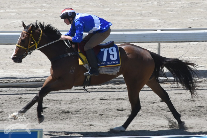 Big Brown (USA) / Wonderment (NZ) - photo 1