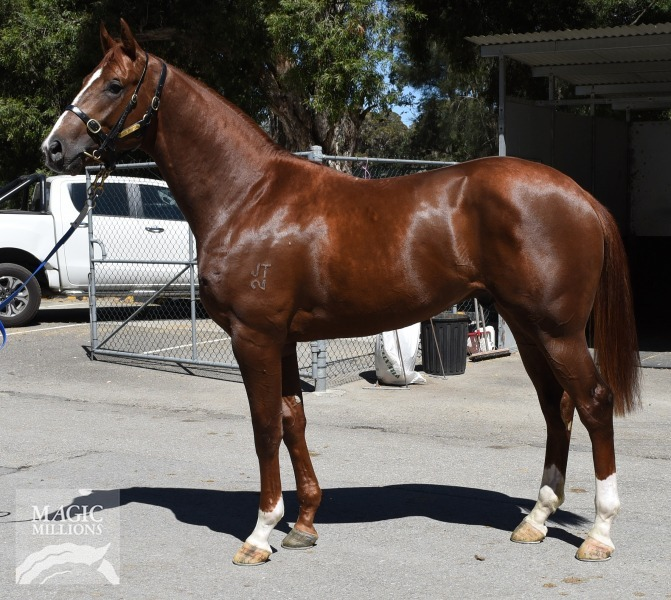 Sebring (AUS) / Moon de French (USA) - photo 1