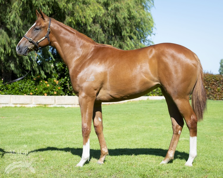 Snitzel (AUS) / Belle d'Amour (AUS) - photo 1