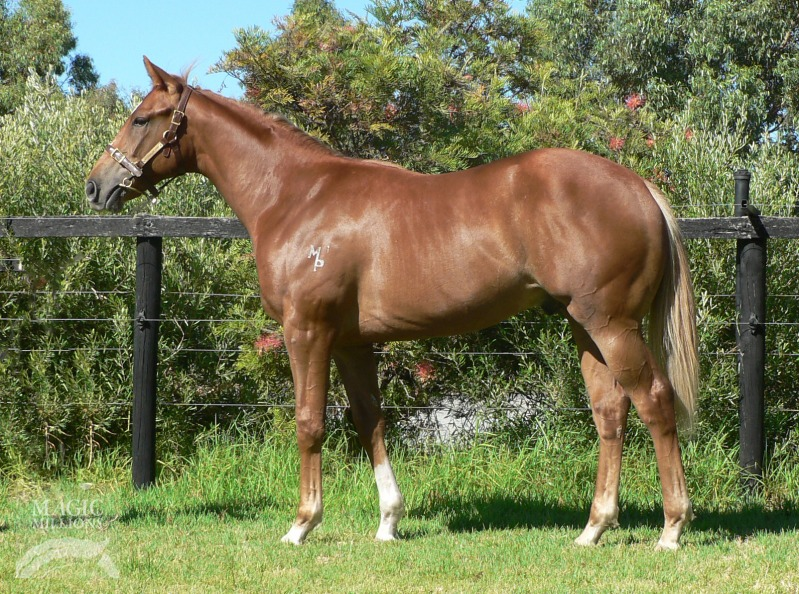 Safeguard (AUS) / Mississippi Belle (AUS) - photo 1