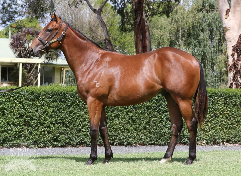 Not a Single Doubt (AUS) / Just Our Girl (AUS) - photo 1